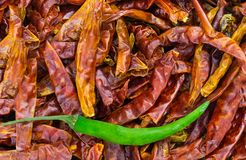 Mix peppers spicy spice mexico and asia dry and fresh pod pattern design menu web site stock image