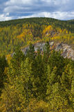 Mix of pine trees and autumn colors north of Liard Hot Springs, BC Stock Photography