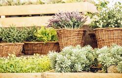 Mix of plants in wicker pots, gardening theme Royalty Free Stock Photo