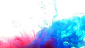 Mix red and blue color paint ink drops in water slow motion full hd video white background with copy space. Inky cloud swirling flowing underwater. Abstract stock video