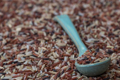 Mix rices on blue spoon, on mix rices Stock Photo