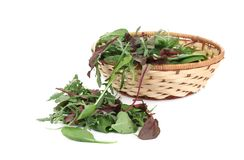 Mix salad in basket. Royalty Free Stock Photo
