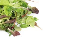 Mix salad. Stock Images