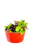 Mix salad in red bow Royalty Free Stock Photography