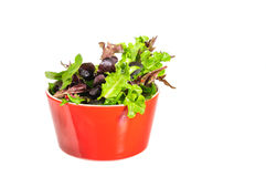 Mix salad in red bow Royalty Free Stock Image