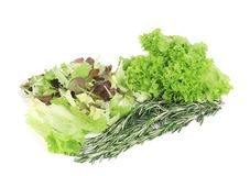 Mix salad with rosemary. Royalty Free Stock Image