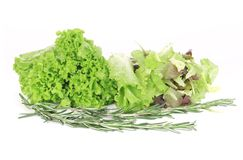 Mix salad with rosemary. Stock Photography