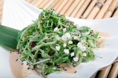 Mix salad seaweed. Stock Images