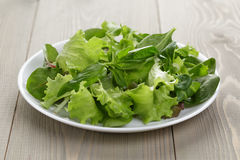 Mix salad in white bowl Royalty Free Stock Photography