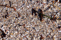 Mix of seaweed, shells, sand, pebbles - Background Royalty Free Stock Images