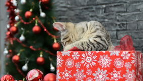 Mix of six scenes, beautiful cat and white puppy in holiday spirit surrounded by New Year`s decoration stock footage