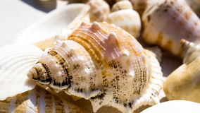 Mix of snail shells and seashells. Mix of different snail shells and seashells Stock Images