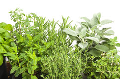 Mix of Spice leaves Royalty Free Stock Photos