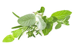 Mix of Spice leaves Stock Image