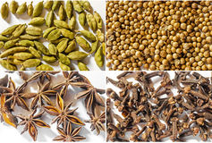 Mix of spices Royalty Free Stock Photo