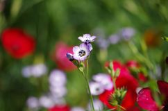 Spring flowers at San Antonio Botanical Gardens. A mix of springtime wildflowers bloom in a living bed at San Antonio Botanical Gardens in Texas Royalty Free Stock Photos