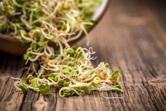 Mix of sprouted seeds Royalty Free Stock Photography