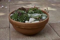 Mix of succulents in terracotta pottery stock photos