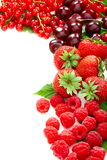 Mix of summer berries. Stock Photography