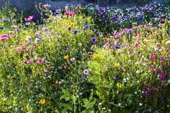 Mix summer flowers. Flowerbed. English garden. Mixborders Royalty Free Stock Photo