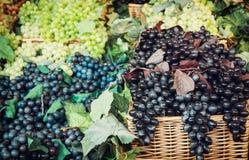 Mix of tasty grapes Stock Photos