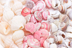 Mix Three Kind Of Sea Shells. Royalty Free Stock Images