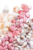 Mix Three Kind Of Sea Shells. Royalty Free Stock Photo