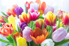 Mix of tulips flowers Royalty Free Stock Photography