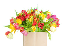 Mix of tulips in the paper bag Royalty Free Stock Photos