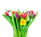 Mix of tulips Royalty Free Stock Image