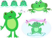 Mix Variety of Frogs Royalty Free Stock Photography