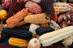 Mix variety of Peruvian native heirloom corns in Cusco local farmer market stock photography