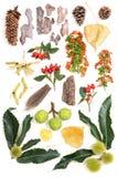 Mix of various natural items of autumn season Royalty Free Stock Photos