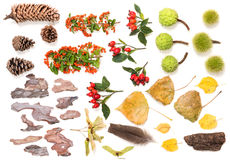 Mix of various natural items of autumn season Royalty Free Stock Image