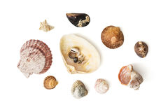 Mix of various sea shells Royalty Free Stock Image