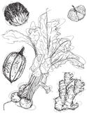Mix vegetable sketches Stock Photography