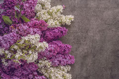 Mix white and purple lilac on dark background, spring blooming plant, place for text Stock Photography