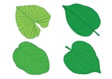 Green Leaves on white background royalty free illustration