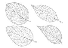 Leaves line and Single leaf on white background royalty free illustration