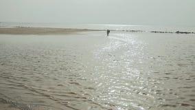Счастливая молодая женщина идя с ее mixbreed собакой на пляже, задний взгляд видеоматериал