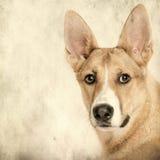 Mixed-allevi il cane nella parte anteriore sulla priorità bassa del grunge Fotografia Stock Libera da Diritti