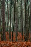 Mixed autumn forest. Royalty Free Stock Photos