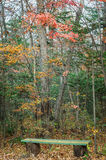 Mixed autumn forest deciduous, coniferous, bench Stock Photography