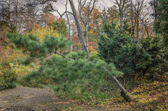 Mixed autumn forest deciduous, coniferous Royalty Free Stock Images