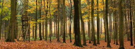 Mixed autumn forest panorama stock photo