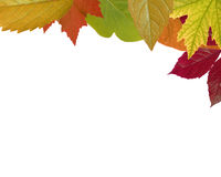 Mixed - Autumn Leaf Frame (XXL) Stock Photo