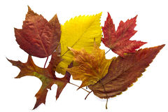Mixed Autumn Leaves Background royalty free stock image