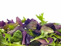Mixed baby greens. Isolated on white Royalty Free Stock Photography