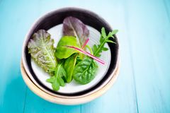 Mixed baby leaf salad. Of red chard, arugula, red lettuce and tatsoi in small bowls on a aquamarine wooden table, Selective focus Stock Photo