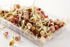 Mixed Bean Sprouts royalty free stock photo